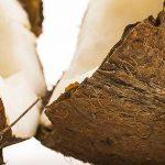 Kókusz: Diós kókuszgolyó recept